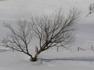 winterbaum.jpg
